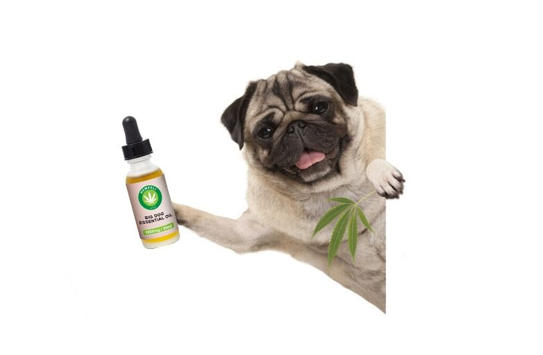 what is cbd for pets