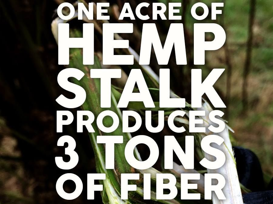 Move Over Cotton, Say Hello To Hemp