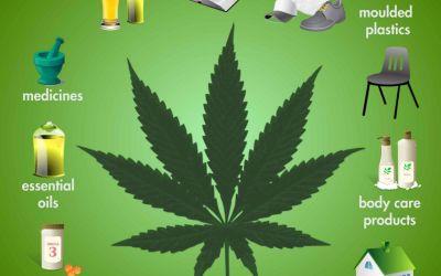 Hemp, Cannabis and Marijuana: What's the Difference?