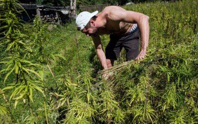 United Nations Declaration Backs Cannabis For Rural Development