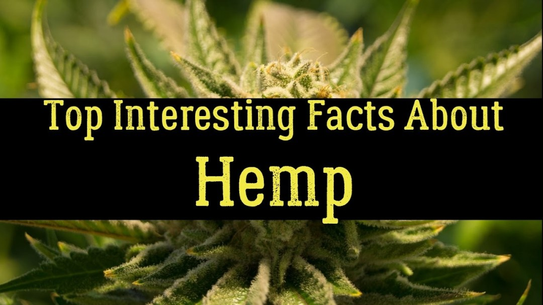Hemp: Just the Facts
