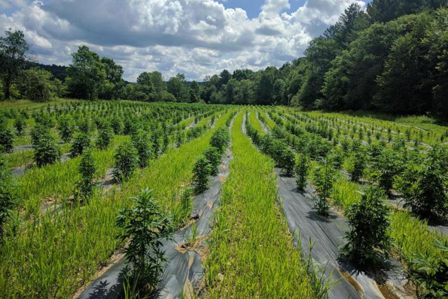 CropLogic Advances on Oregon Plans as US Legalises Hemp
