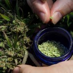 Hemp Farms In Texas? Ag Commissioner Sid Miller Among Backers For Legalization
