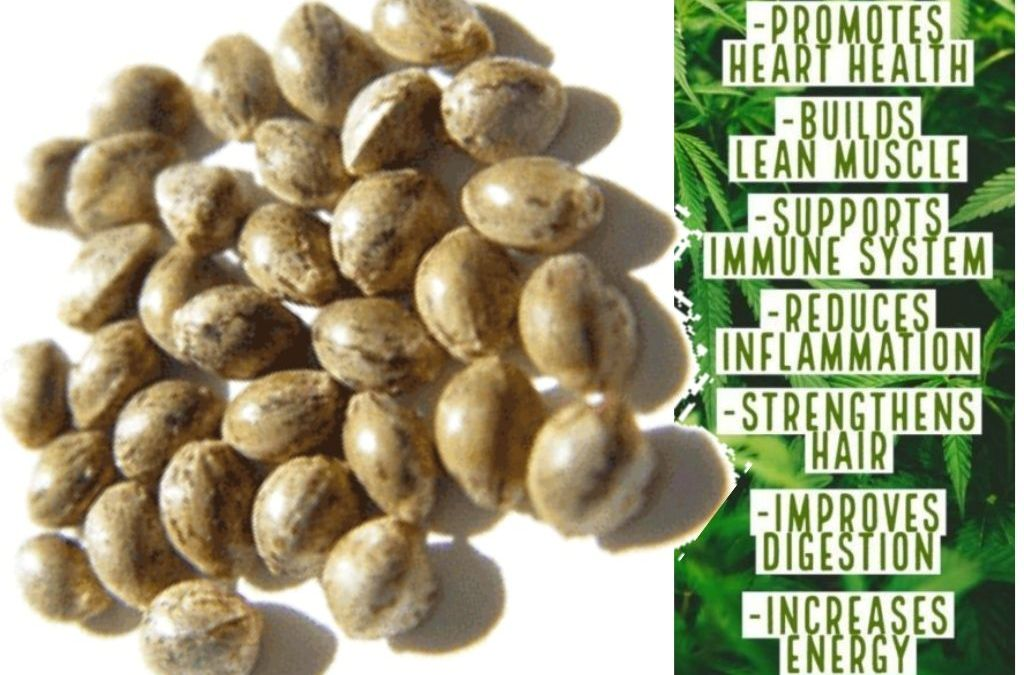 10 Benefits of Hemp Protein