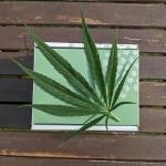 Is the U.S. Getting on Board With Marijuana Legalization?
