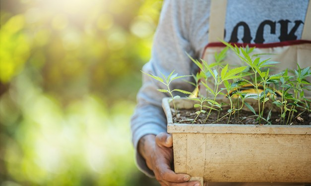 Hemp: Low-Hanging Fruit for Climate Change Fight