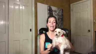 CBD Oil Benefits for Dogs and Other Pets   Hemp Oil Cannabidiol Cannabis