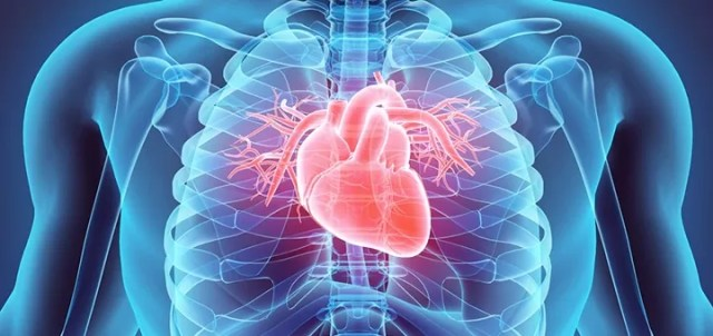 CBD offers some protection against cardiovascular problems.