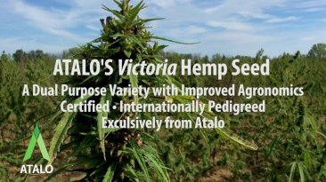 ATALO'S Certified, Pedigreed, Proprietary Hemp Seed for CBD and Grain