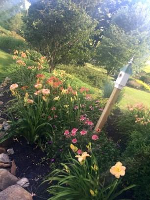 Jayne Shord's gardens in bloom