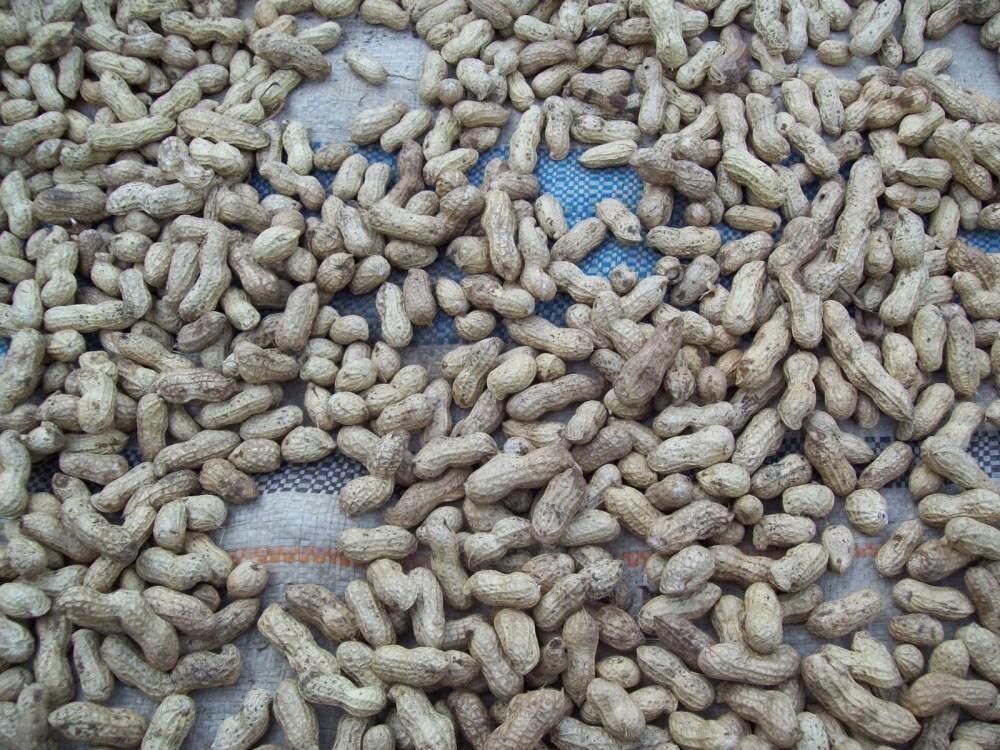 Kacang Tanah buat Kebahagian Pria dan Wanita