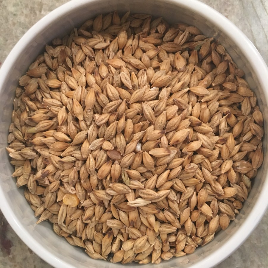 Barley Whole Grains from Scratch and Peck Feeds