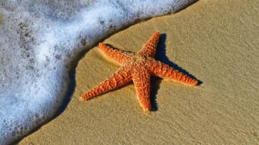 Starfish In The Sea Shore.