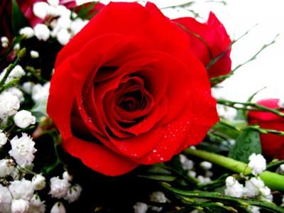 Ros, rödaste ros...