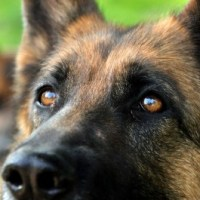 Kontaktövningar med hund