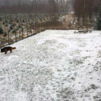 Den första snön 2019!