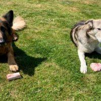Är märgben hundars motsvarighet till isglass?