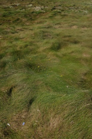 L'herbe épaisse de l'île Vierge. Photographie personnelle.