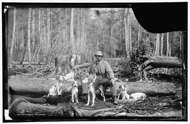 Avide de cerfs. Photographie William Henry Jackson pour la Detroit Publishing Company, 1880. Négatif sur verre, 7 x 11 in.