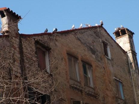 Pigeons, Venice © Henry Hyde