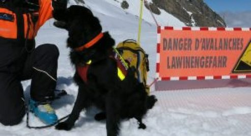 Fjord, off-piste rescue dog, avalanche rescue