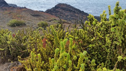 Shrubs at the top of the cliffs