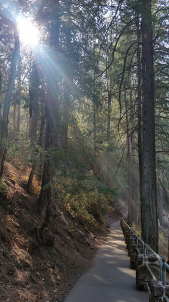 Early morning sun on the loop trail