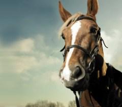 homehorses-w255h225