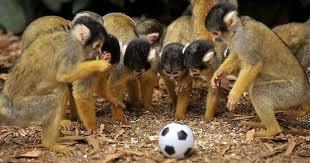 monkey league
