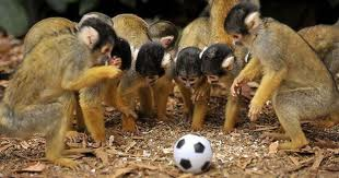 monkey league