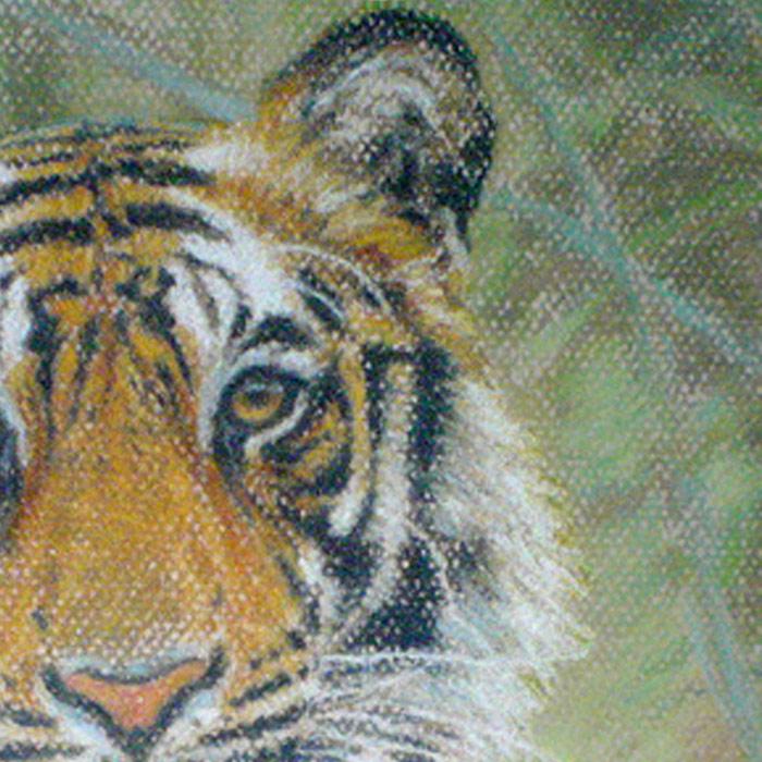 Detail of Michael Hepburn's Bengal tiger study.