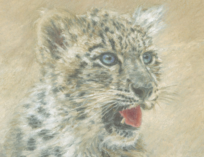 Detail of Michael Hepburn's vignette style portrait of the a snow leopard.