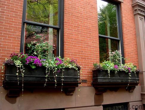Pencere Önü Saksılar
