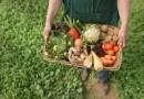 Organik Yiyeceklerle Çocuklarını Sağlıklı Besle