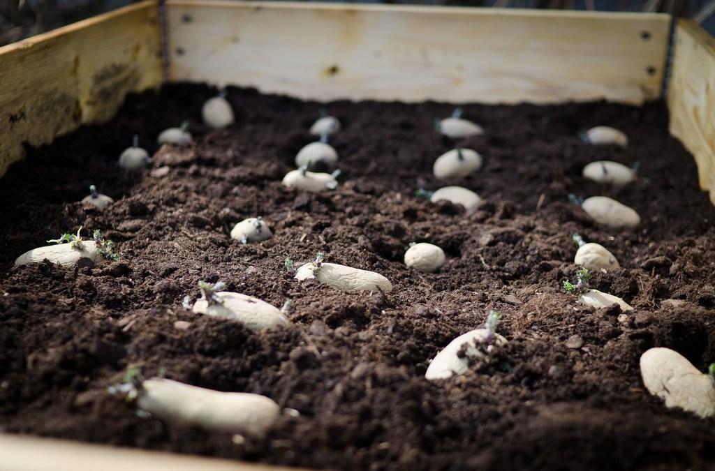 Pantofflorna i jorden
