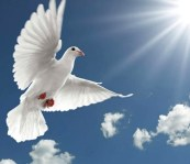 the holy spirit of God is not