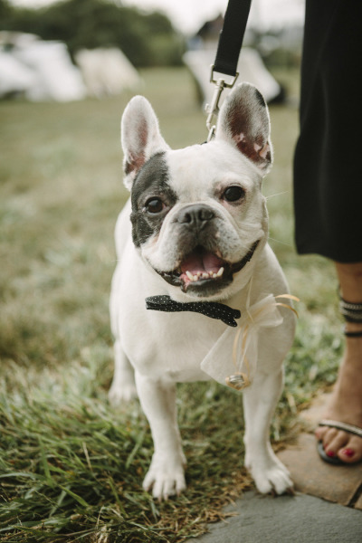http://www.stylemepretty.com/gallery/tag/dog/picture/955709/