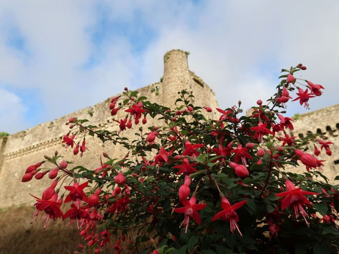 Fuchsien in Fougeres