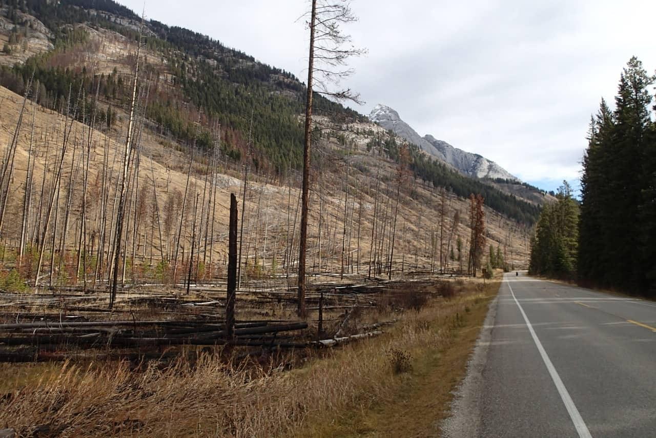 Afgebrand stuk bos