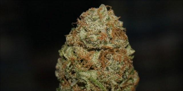 strongest hybrid strains: 5. Bruce Banner #3