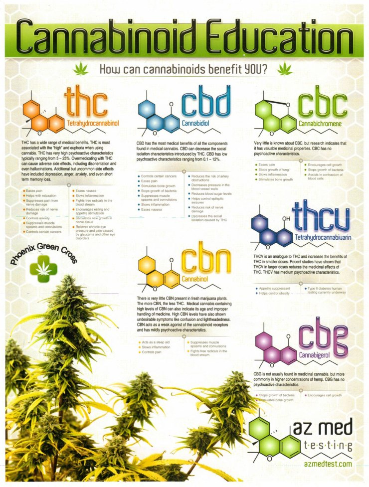 Cannabinoid Education