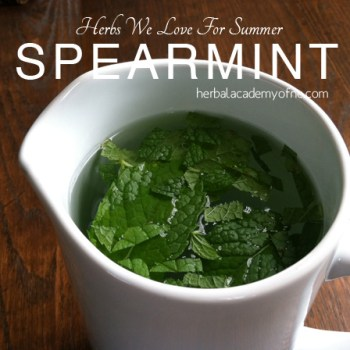 HERBS we love for summer, spearming