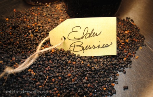 How To Make Immune Stimulating Elderberry Syrup | Herbal Academy | Cold and flu viruses are everywhere! Learn how this immune stimulating remedy can come to your aid.