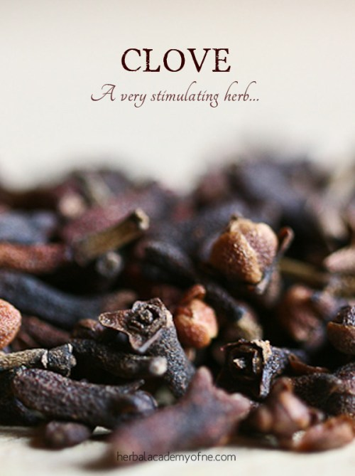 what are cloves - a stimulating herb