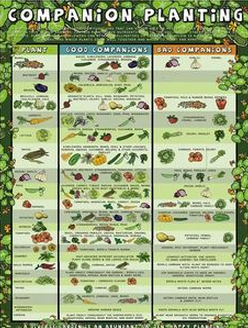 Square foot garden layout plans - Companion Planting Chart For Herbs And Vegetables