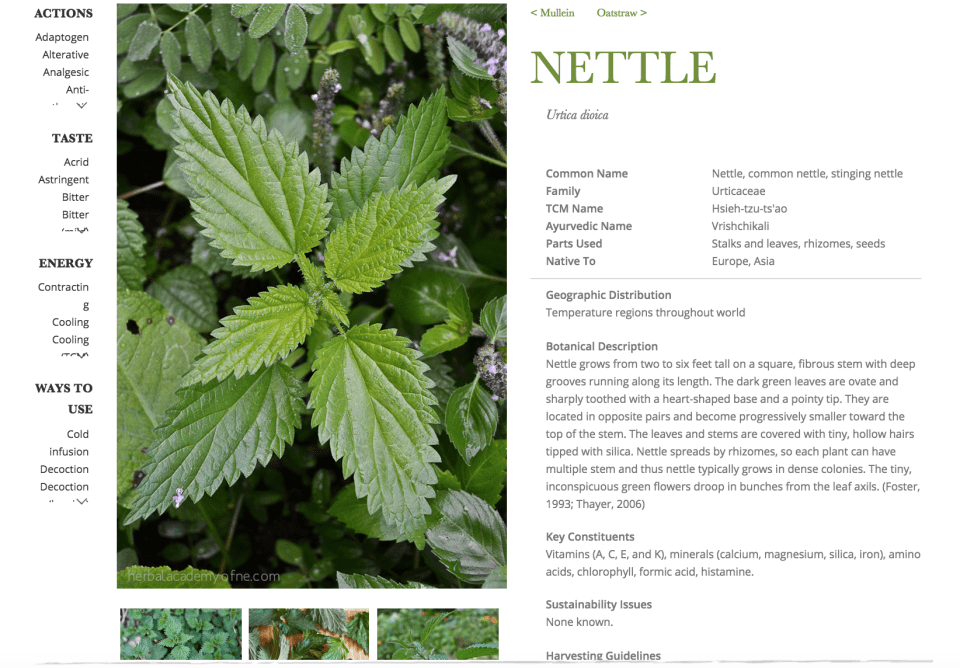 Nettle Monograph in The Herbarium