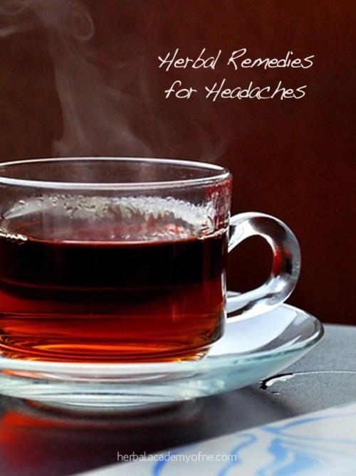 Herbal Remedies for Headaches - Herbal Academy of New England