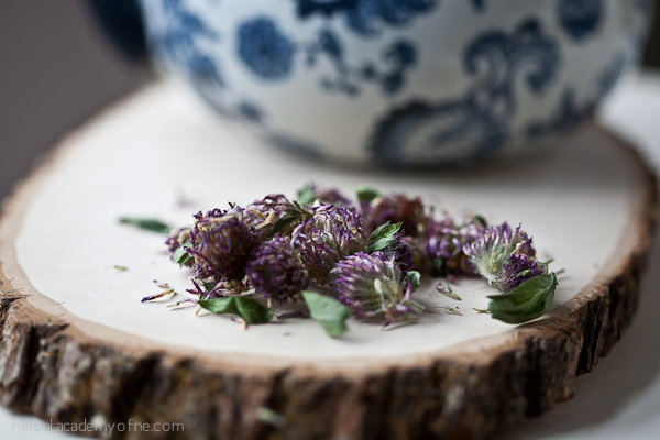 Red Clover Tea - Herbal Academy of New England