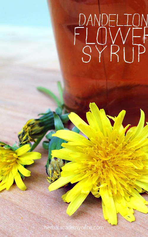 Sweeten Your Breakfast With Dandelion Flower Syrup   Herbal Academy   This spring I vowed I was going to make use of the happy little flower that I grew up thinking was the enemy. I use this dandelion flower syrup on waffles!