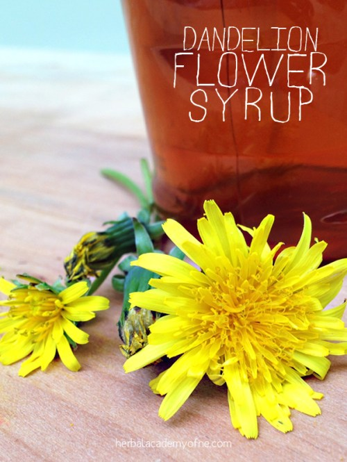 Dandelion Flower Syrup recipe - Herbal Academy of New England